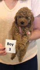 Georgie Boy 3 pic 4 6-11