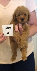 Georgie Boy 4 pic 2 6-11
