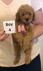 Georgie Boy 4 pic 3 6-11