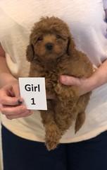 Georgie Girl 1 6-11