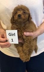 Georgie Girl 1 pic 3 6-11