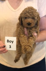 Georgie Boy 3 6-11