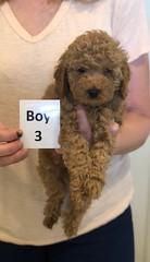 Georgie Boy 3 pic 2 6-11