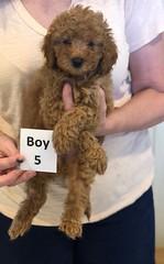 Georgie Boy 5 pic 2 6-11