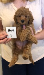 Georgie Boy 5 pic 4 6-11