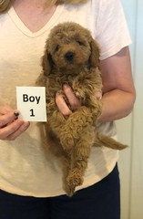 Georgie Boy 1 pic 2 6-11