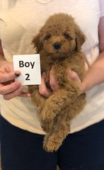 Georgie Boy 2 6-11