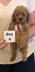 Georgie Boy 4 6-11