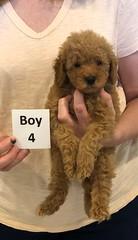 Georgie Boy 4 pic 4 6-11