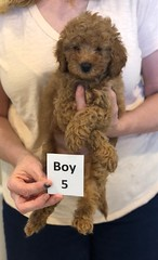Georgie Boy 5 pic 3 6-11