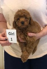 Georgie Girl 1 pic 2 6-11