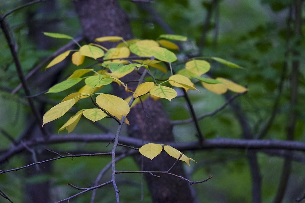 фото: Жёлтая ветка весной