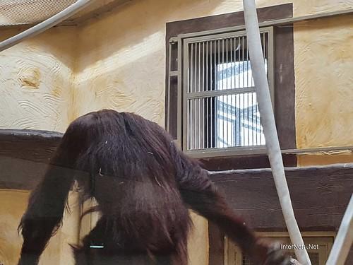 Зоопарк 12 місяців в Димері біля Київа  Ukraine Internetri 090