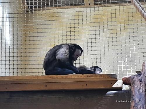 Зоопарк 12 місяців в Димері біля Київа  Ukraine Internetri 085