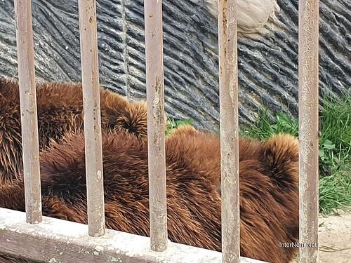 Зоопарк 12 місяців в Димері біля Київа  Ukraine Internetri 061
