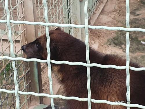 Зоопарк 12 місяців в Димері біля Київа  Ukraine Internetri 048