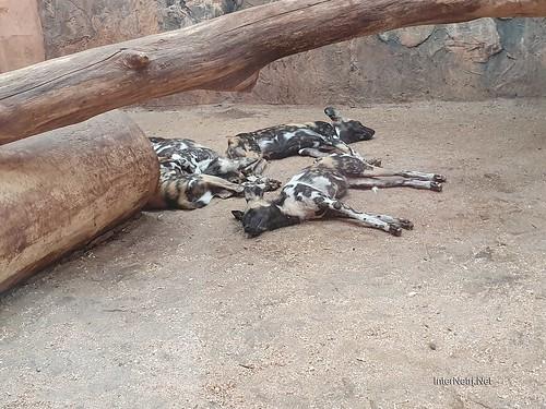 Зоопарк 12 місяців в Димері біля Київа  Ukraine Internetri 045