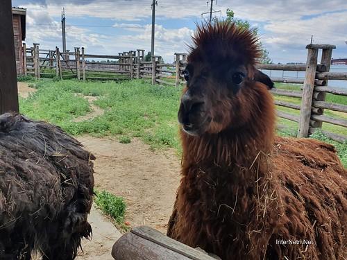 Зоопарк 12 місяців в Димері біля Київа  Ukraine Internetri 017