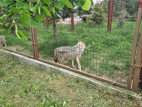 Зоопарк 12 місяців в Димері біля Київа  Ukraine Internetri 015