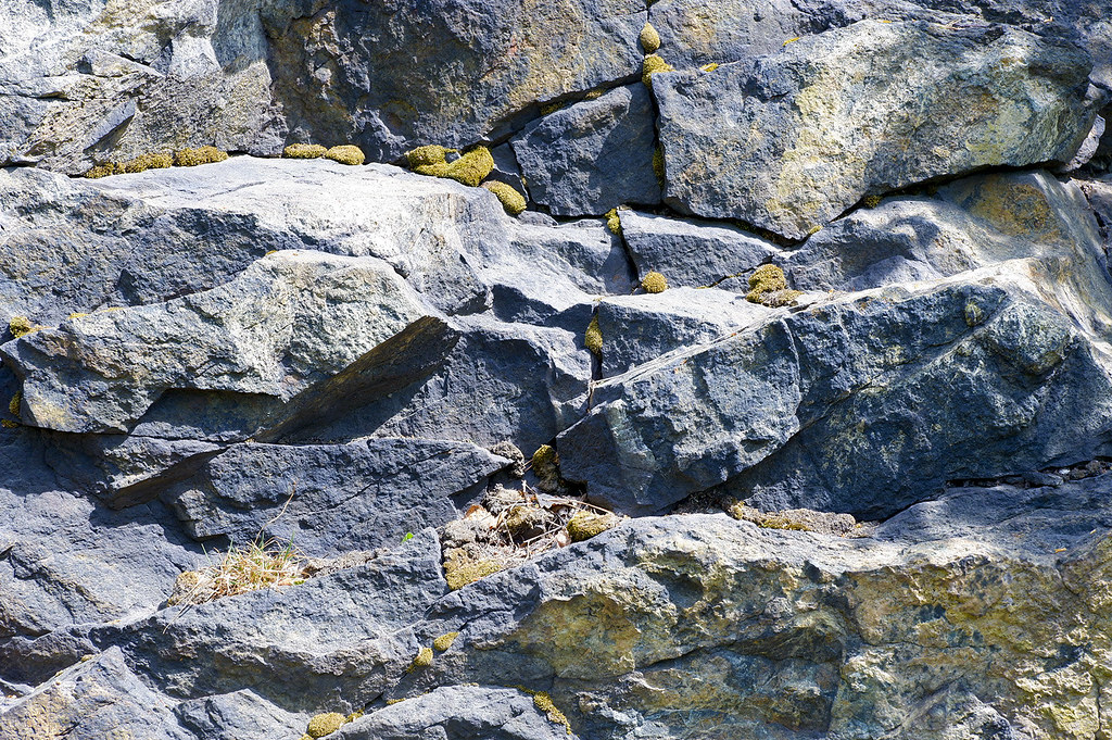 фото: Мох на камнях