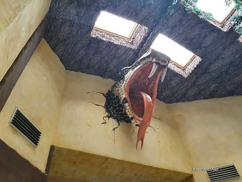 Зоопарк 12 місяців в Димері біля Київа  Ukraine Internetri 093