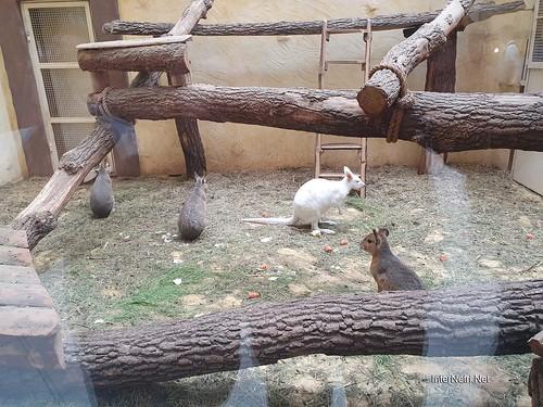 Зоопарк 12 місяців в Димері біля Київа  Ukraine Internetri 092