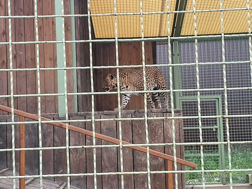 Зоопарк 12 місяців в Димері біля Київа  Ukraine Internetri 074