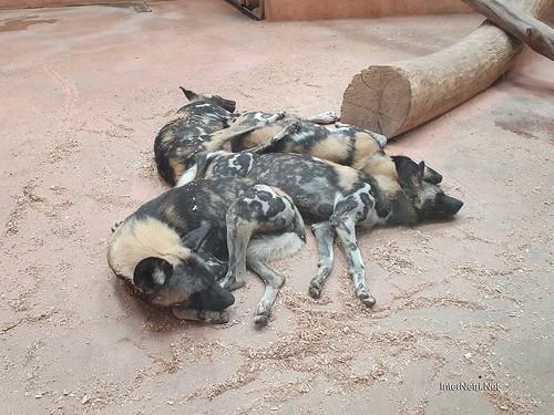 Зоопарк 12 місяців в Димері біля Київа  Ukraine Internetri 040