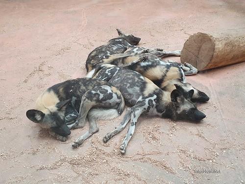 Зоопарк 12 місяців в Димері біля Київа  Ukraine Internetri 039