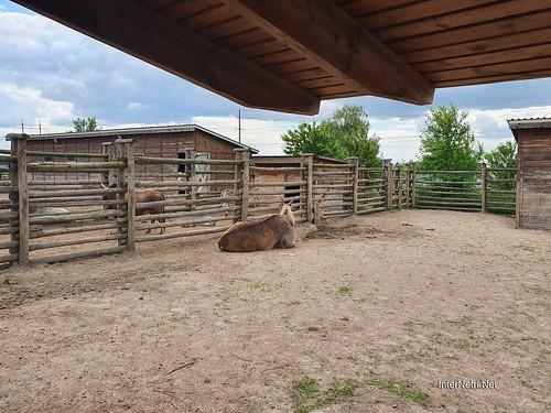 Зоопарк 12 місяців в Димері біля Київа  Ukraine Internetri 022