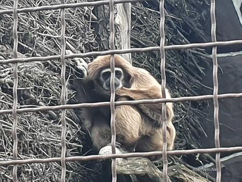 Зоопарк 12 місяців в Димері біля Київа  Ukraine Internetri 099