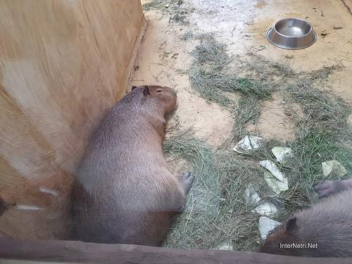 Зоопарк 12 місяців в Димері біля Київа  Ukraine Internetri 097