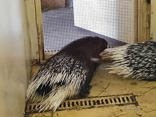 Зоопарк 12 місяців в Димері біля Київа  Ukraine Internetri 081