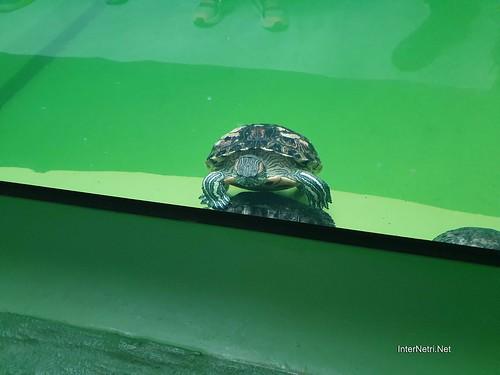 Зоопарк 12 місяців в Димері біля Київа  Ukraine Internetri 068