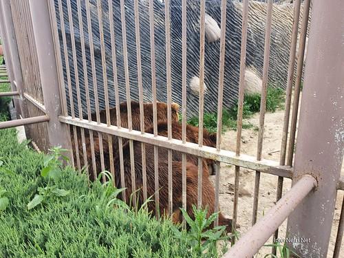 Зоопарк 12 місяців в Димері біля Київа  Ukraine Internetri 060