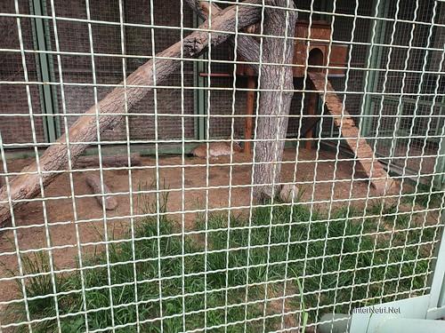 Зоопарк 12 місяців в Димері біля Київа  Ukraine Internetri 049