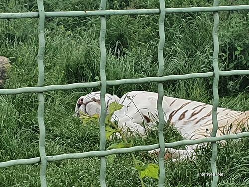 Зоопарк 12 місяців в Димері біля Київа  Ukraine Internetri 047