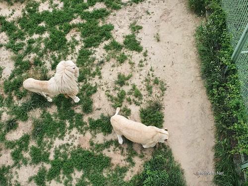 Зоопарк 12 місяців в Димері біля Київа  Ukraine Internetri 036