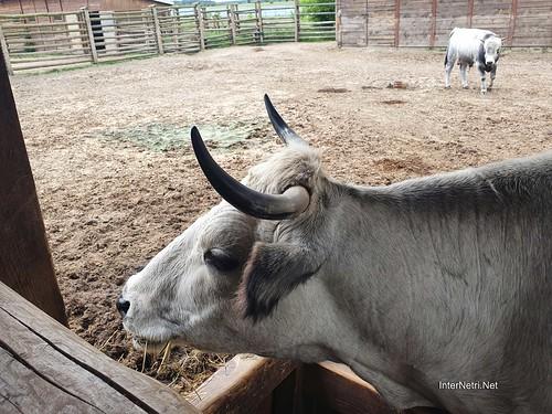 Зоопарк 12 місяців в Димері біля Київа  Ukraine Internetri 032
