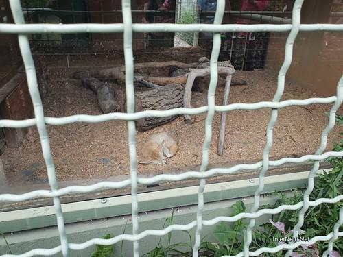 Зоопарк 12 місяців в Димері біля Київа  Ukraine Internetri 011