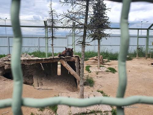 Зоопарк 12 місяців в Димері біля Київа  Ukraine Internetri 009