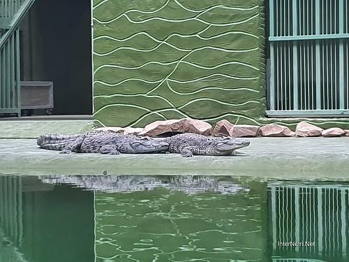 Зоопарк 12 місяців в Димері біля Київа  Ukraine Internetri 071
