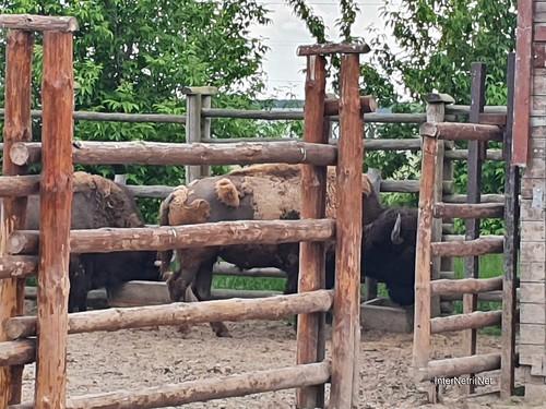 Зоопарк 12 місяців в Димері біля Київа  Ukraine Internetri 057