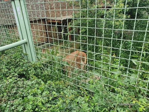 Зоопарк 12 місяців в Димері біля Київа  Ukraine Internetri 051