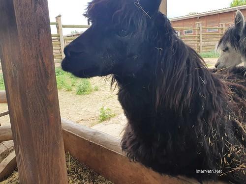 Зоопарк 12 місяців в Димері біля Київа  Ukraine Internetri 019