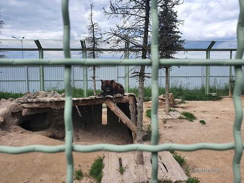 Зоопарк 12 місяців в Димері біля Київа  Ukraine Internetri 008
