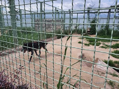 Зоопарк 12 місяців в Димері біля Київа  Ukraine Internetri 007