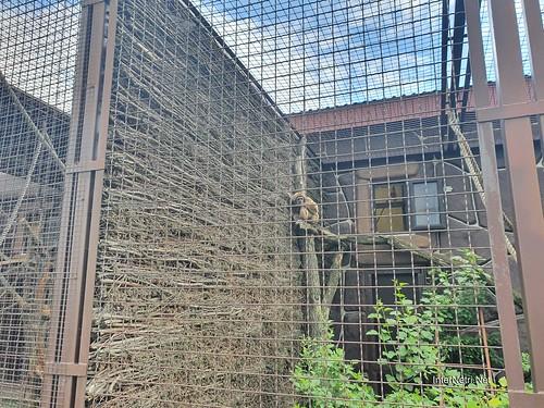 Зоопарк 12 місяців в Димері біля Київа  Ukraine Internetri 098