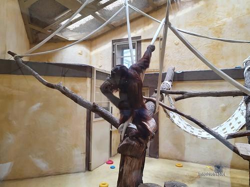 Зоопарк 12 місяців в Димері біля Київа  Ukraine Internetri 089