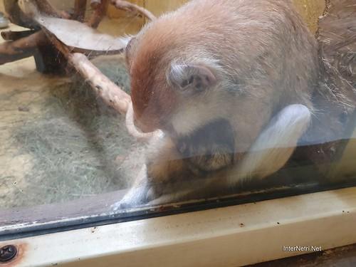 Зоопарк 12 місяців в Димері біля Київа  Ukraine Internetri 086